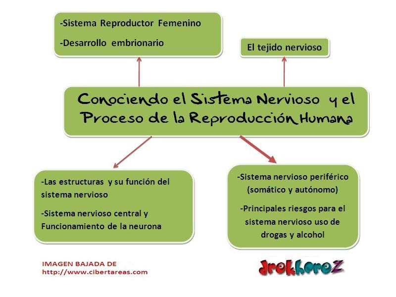 Conociendo el Sistema Nervioso y el Proceso de la Reproduccion ...