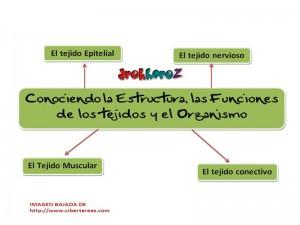 Conociendo la estrutura de las funciones de los tejidos y el organismo-Mapa Mental 0