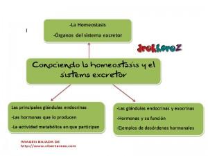 Conociendo la homeostasis y el sistema excretor-Mapa Mental 0