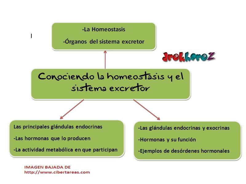Conociendo la homeostasis y el sistema excretor-Mapa Mental ...