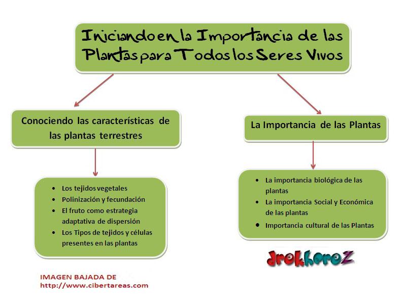 Iniciando en la importancia de las plantas para todos los for Importancia de las plantas ornamentales