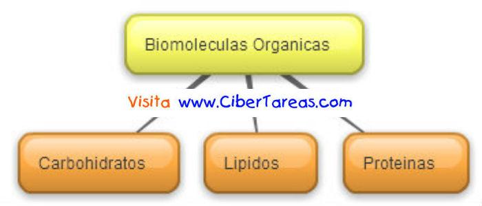 Biomoleculas Organicas Mapa Conceptual Cibertareas