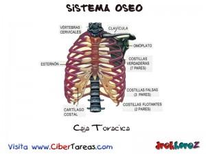 Caja Toracica-Sistema Oseo