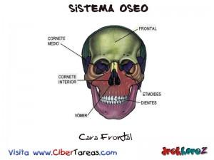 Cara Frontal-Sistema Oseo