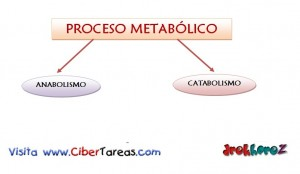 Proceso Metabolico en Biologia 1