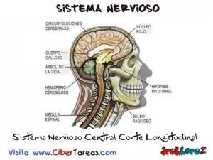 Sistema Nervioso Central Corte Longitudinal-Sistema Nervioso