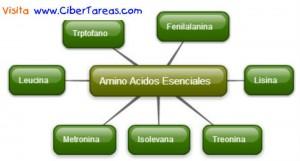 Amino Acidos Esenciales en Biologia-Mapa Mental