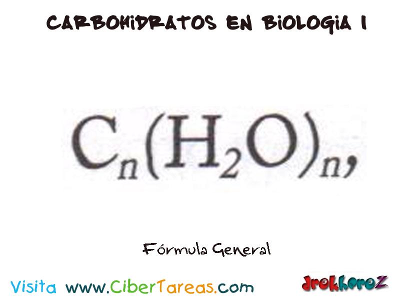 Carbohídratos – Moléculas Orgánicas – Biología 1 | CiberTareas