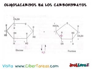 Glucosa y Frutosa-Oligosacaridos en los Carbohidratos-Biologia 1