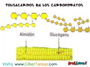 Polisacaridos en los Carbohidratos-Biologia 1