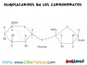 Sacarosa-Oligosacaridos en los Carbohidratos-Biologia 1