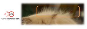 ejemplo frotamiento o friccion
