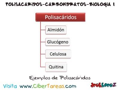 Ejemplos de Polisacaridos en los Carbohidratos-Biologia 1