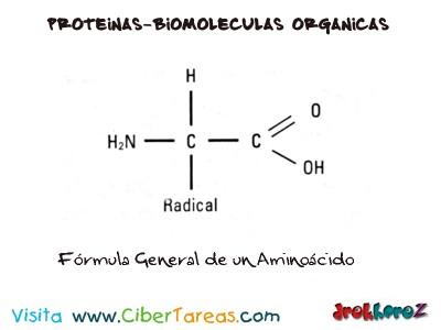 Formula General de un Aminoacido-Proteinas-Biologia 1