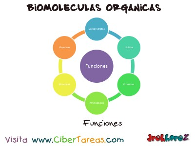 Funciones de los Nutrientes-Biologia 1