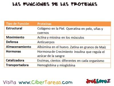 Las Funciones de las Proteinas-Proteinas-Biologia 1