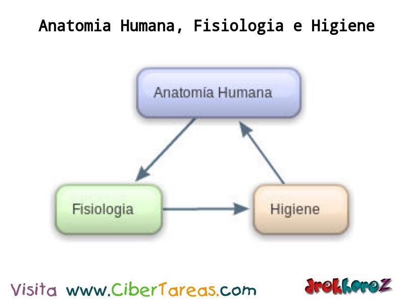 Relacion entre anatomia y fisiologia