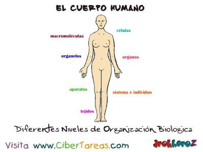 Diferentes Niveles de Organizaccion Biologica_el cuerpo humano_Ciencias de la Salud