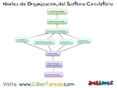 Niveles de Organizacion del Sistema Circulatorio_Ciencias de la Salud