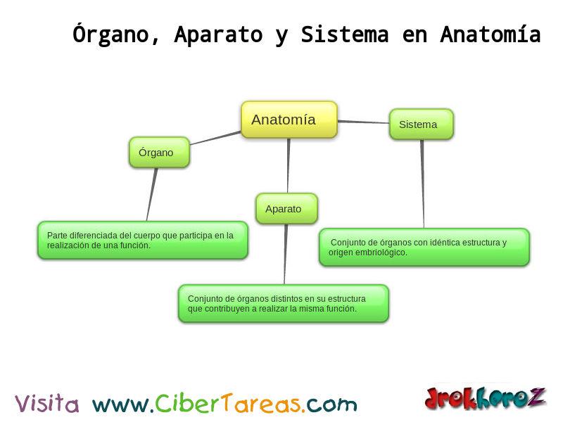 Órgano, Aparato y Sistema – Ciencias de la Salud_1 | CiberTareas