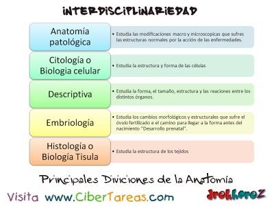 Principales Divisiones de la Anatomia_Interdisciplinariedad_Ciencias de la Salud