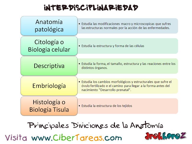 Principales Divisiones de la Anatomía – Ciencias de la Salud_1 ...