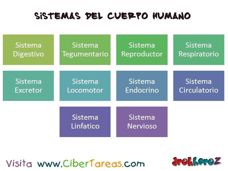 Sistemas del Cuerpo Humano – Ciencias de la Salud_1 | CiberTareas