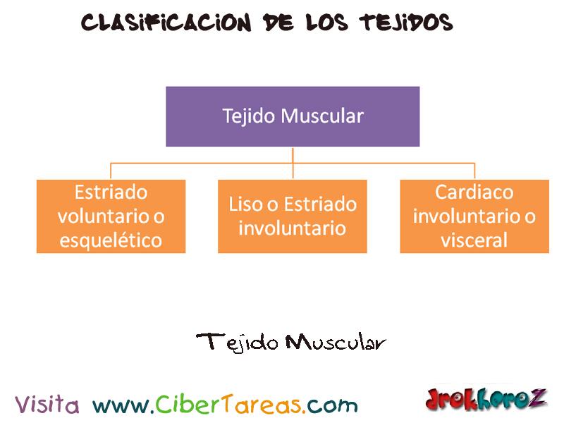Tejido Muscular Mapa – Ciencias de la Salud_1 | CiberTareas