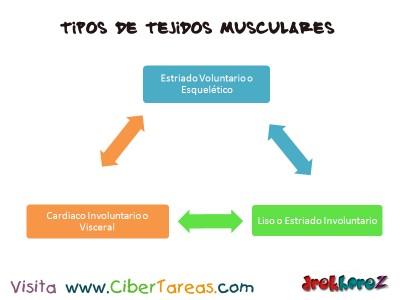 Tipos de Tejidos Musculares_Ciencias de la Salud