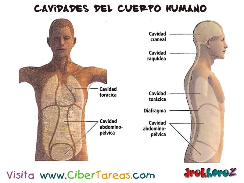 Cavidades del Cuerpo Humano – Ciencias de la Salud_1 | CiberTareas