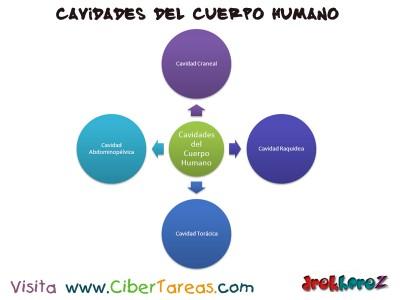 Cavidades del Cuerpo Humano_Ciencias de la Salud_1