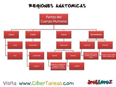 Regiones Anatomicas_Ciencias de la Salud_1