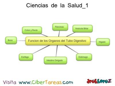 Funcion de los Tubos Digestivo - Ciencias de la Salud_1