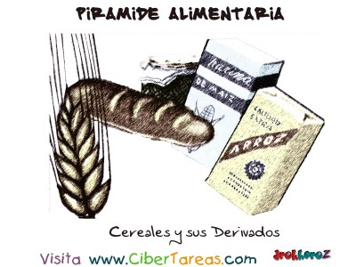 Cereales y sus Derivados - Piramide Alimenticia