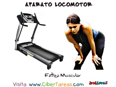 Fatiga Muscular - Aparato Locomotor