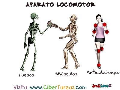 Huesos Musculos y Articulaciones - Aparato Locomotor