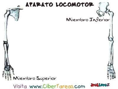 Miembro Superior y Inferior_Sistema Oseo Interior - Aparato Locomotor