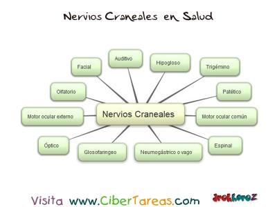 Nervios Craneales -Mapa -Ciencias de la Salud_1