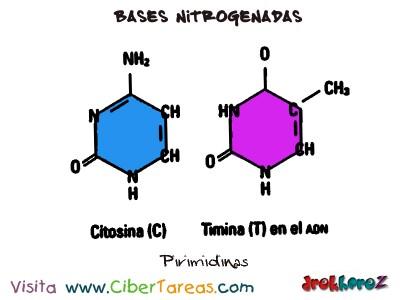 Pirimidinas-Bases Nitrogenadas-Bilogia 1