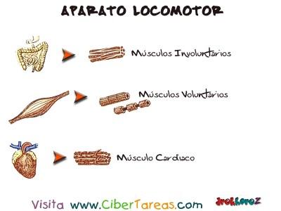 Tipos de Musculo - Aparato Locomotor