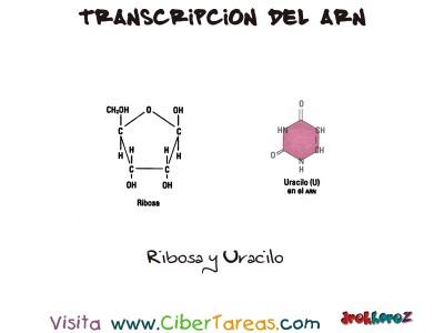 Transcripcion del ARN-Bilogia 1