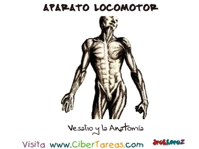 Vesalio y la Anatomia - Aparato Locomotor