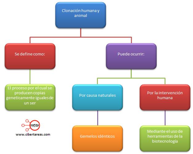 clonacion humana y animal etica y valores 2 mapa conceptual