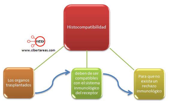 histocompatibilidad concepto mapa conceptual etica y valores 2