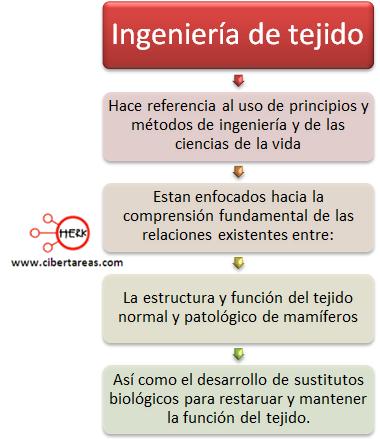 ingenieria de tejido etica y valores mapa conceptual