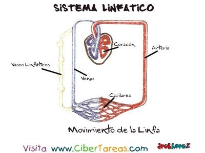 Movimiento de la Linfa - Sistema Linfatico