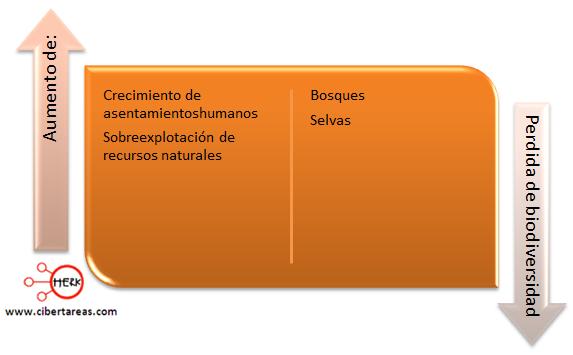 deforestacion en mexico etica y valores