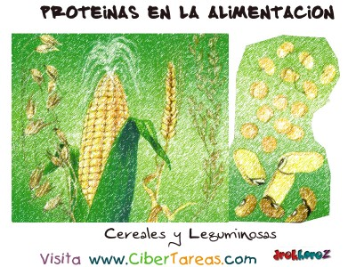 Cereales y Leguminosas - Proteinas en la Alimentacion