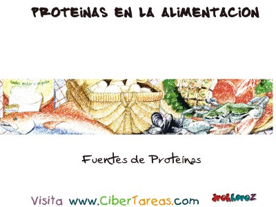 Fuentes - Proteinas en la Alimentacion