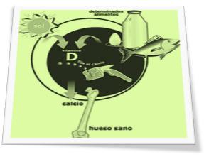 Influencia del sol en la tierra fijacion del calcio y absorcion de vitamina D